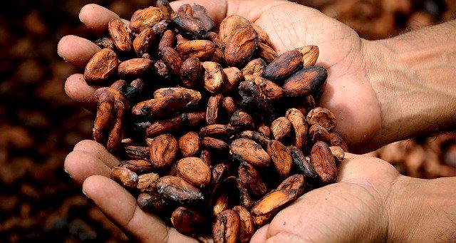 チョコレートは発酵食品?菌とカカオの意外な関係